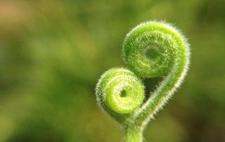 symboliseert groei
