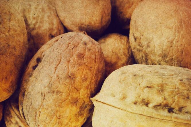 kwaliteitsmanagement op alle niveaus: harde noten om te kraken bij de RvA   Allios Deite